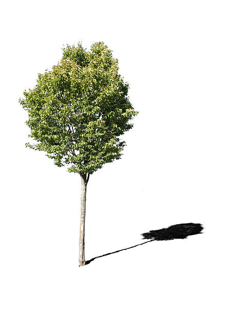 Cut out tree stock photo