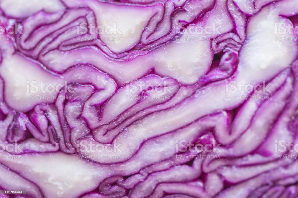 cut red cabbage stock photo