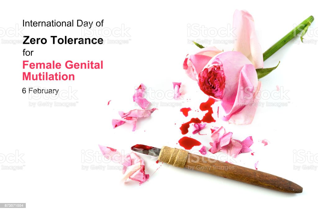 cut rose blossom, blood and knife isolated on a white background with text International Day of Zero Tolerance for Female Genital Mutilation, 6 February, concept for human rights stock photo