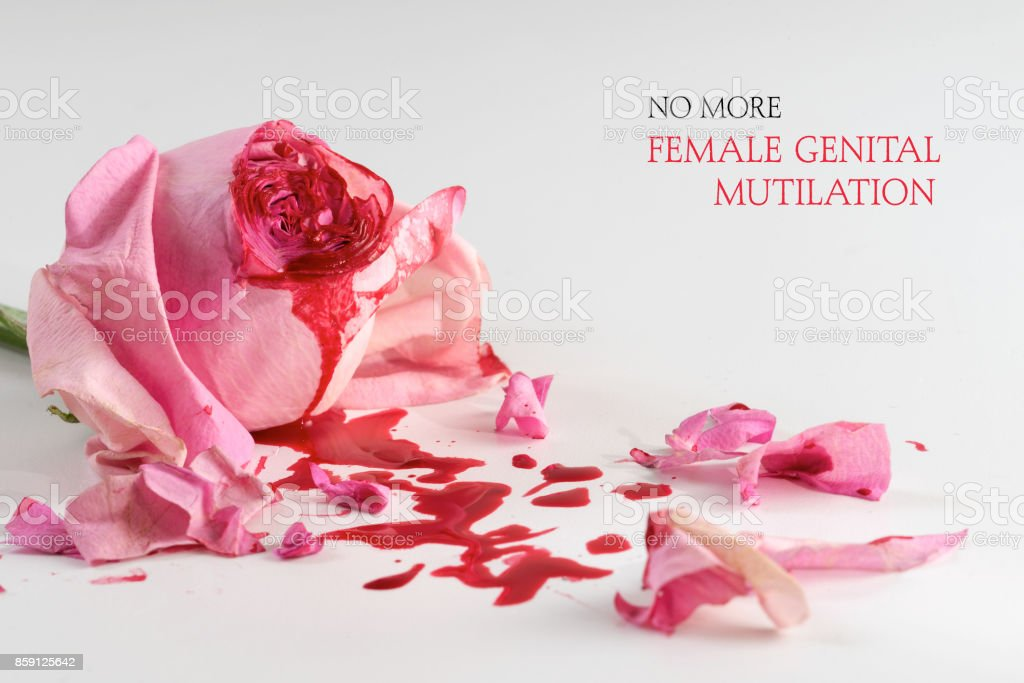 cut rose blossom, blood and petals on a bright gray background with text No More Female Genital Mutilation,  concept for international day 6 february stock photo