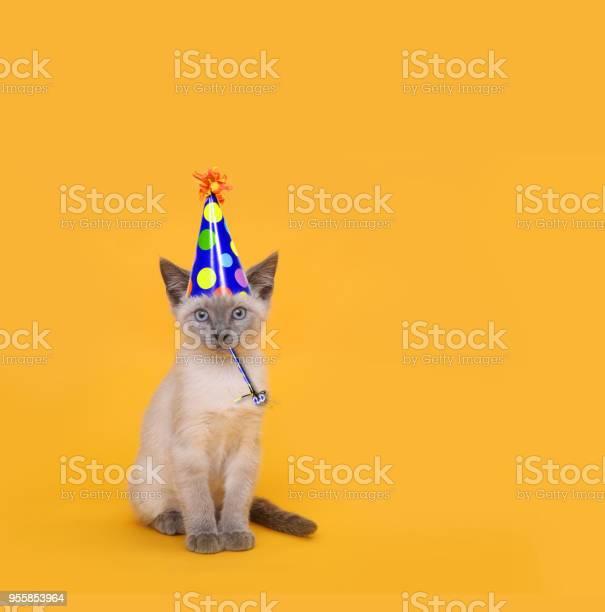 Cut siamese party cat wearing birthday hat picture id955853964?b=1&k=6&m=955853964&s=612x612&h=axh1tb6r87iigdrrr7fo0vjxunmhzqpxs5cu6tv9mk4=