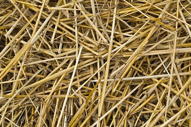 Cut straw stock photo