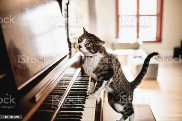 Cut tabby cat playing piano picture id1137047591?b=1&k=6&m=1137047591&s=612x612&h=h aoqnykusl n  6yfbrqtncz 0f igl14hjegp9xaq=