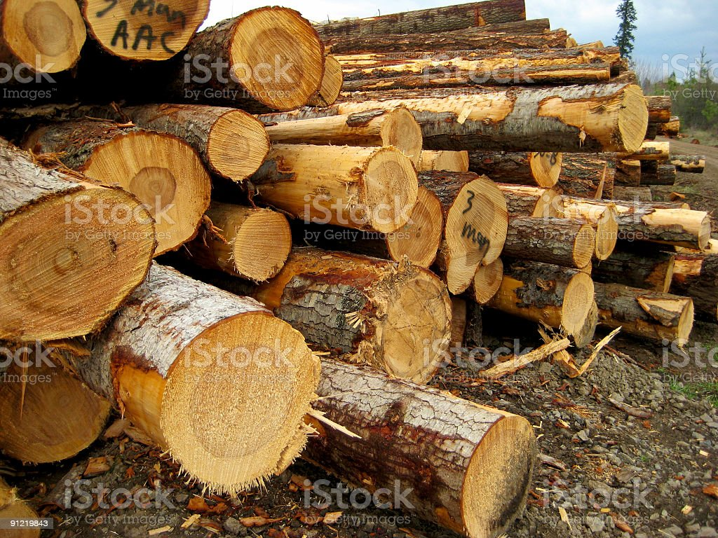 Cut timber logs, Idaho royalty-free stock photo