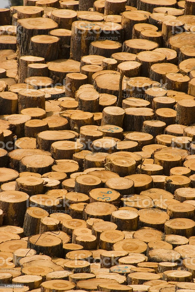 Cut timber royalty-free stock photo