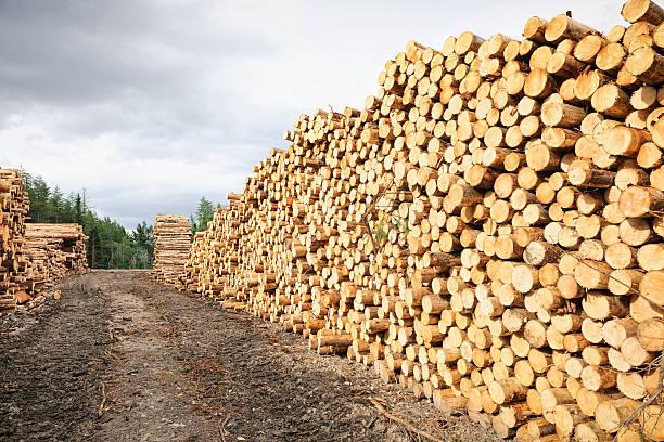 자르다 목재 쌓다 - 목재 공업 뉴스 사진 이미지