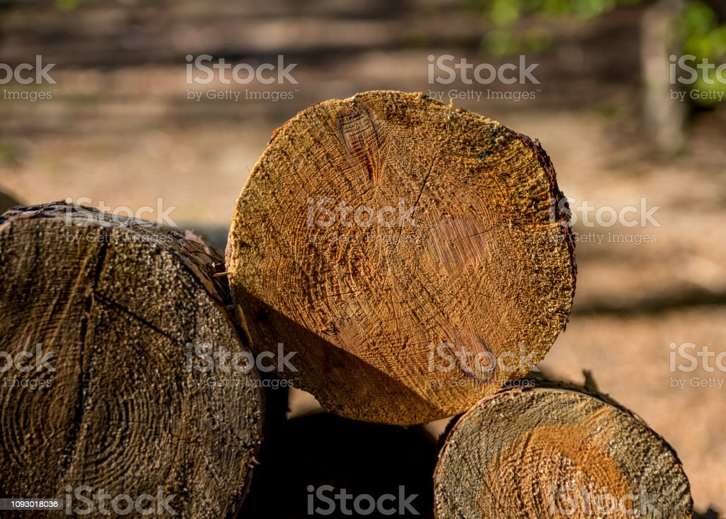 Cut tree branches on a pile in detail I. stock photo