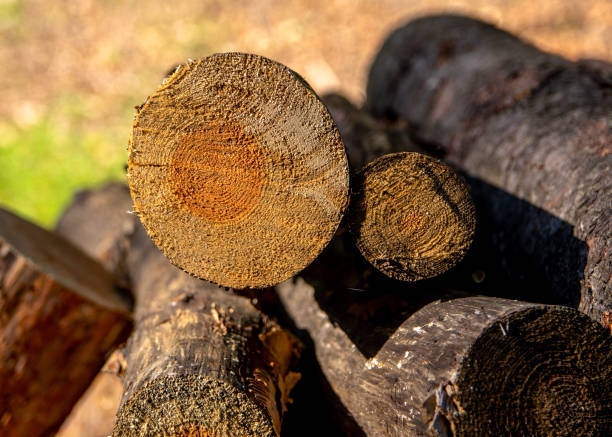 Cut tree branches on a pile in detail II. stock photo