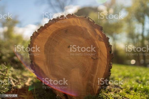 Photo of cut tree, cut pine
