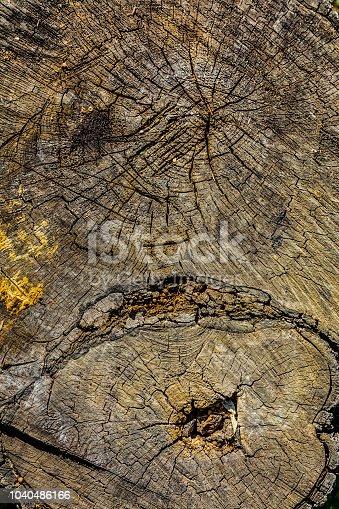 Cut tree stump on grass