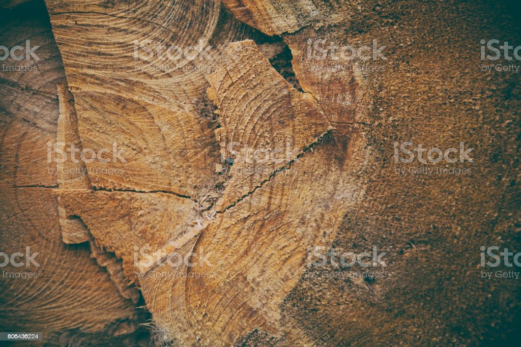 Cut tree trunk background and texture. Wood texture of cut tree...
