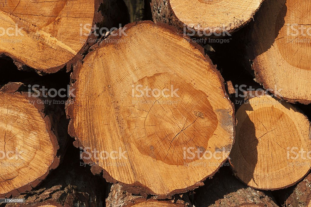 Cut tree trunks with year-rings stock photo