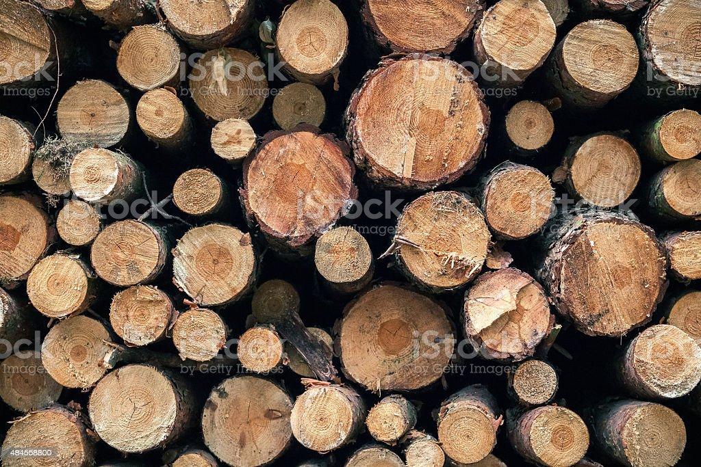 Cut trees pattern. stock photo