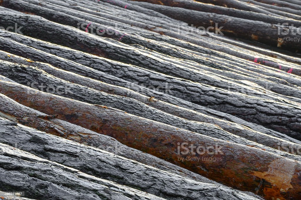 cut trees stock photo
