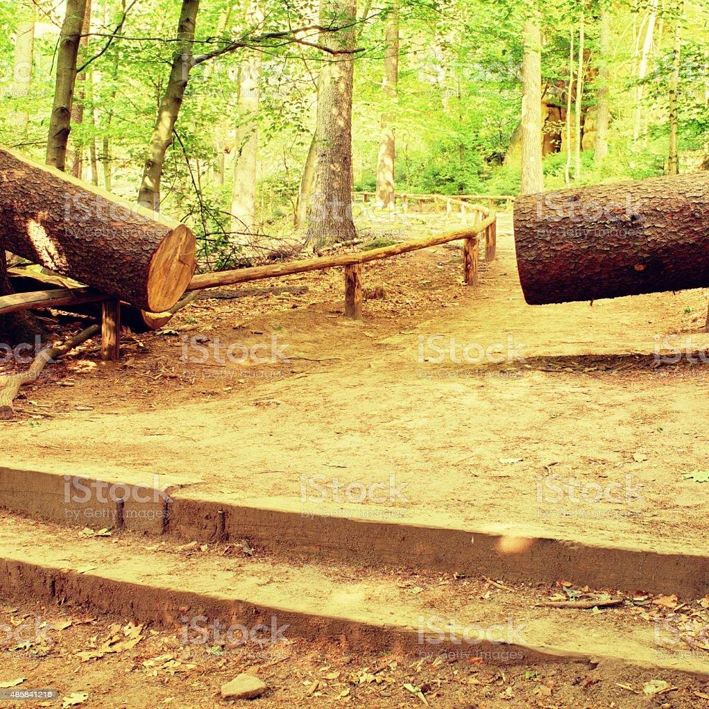 Cut trunk.  Big tree fallen down, little path in forest stock photo