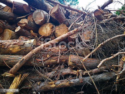 Cut trunks amounted on the forest