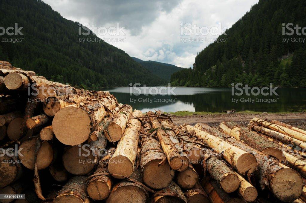 Cut trunks at Lake of Fortebuso, Dolomites, Italy. stock photo