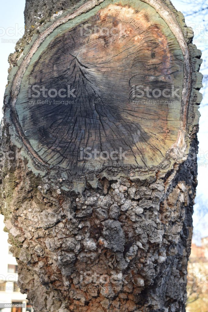 Cut trunks. royalty-free stock photo