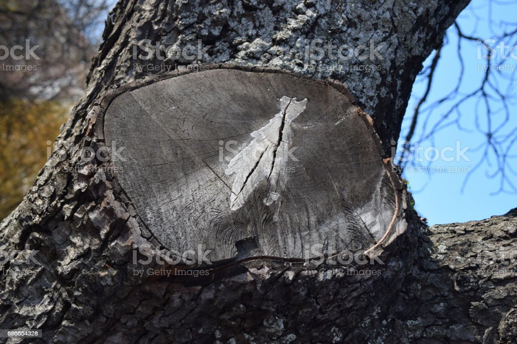Cut trunks. royalty-free stock photo