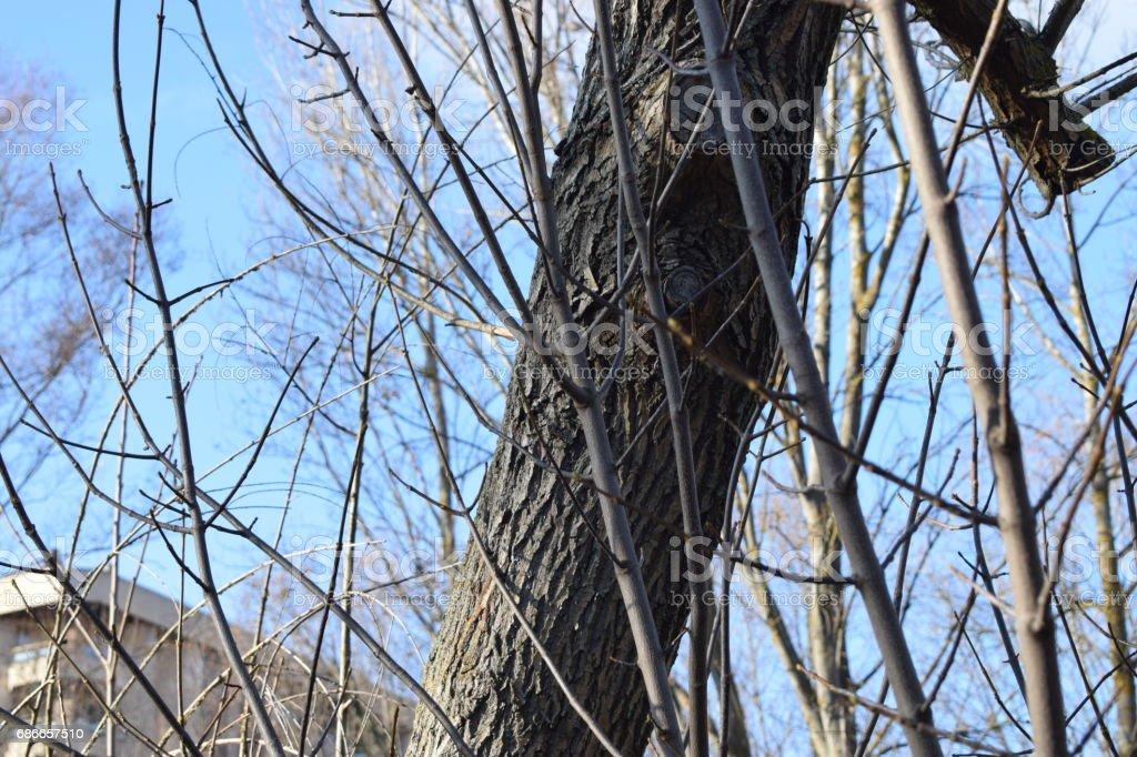 切的樹幹。 免版稅 stock photo