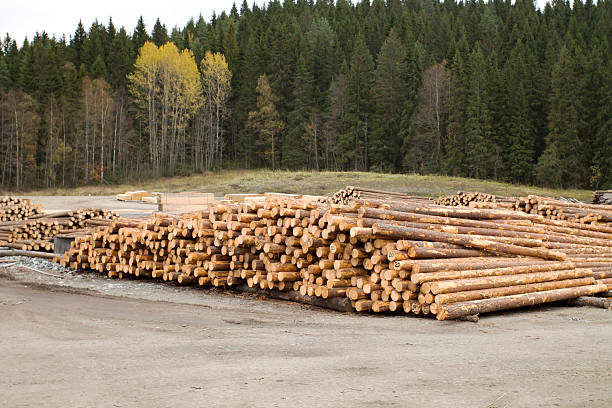 Cut Wood Logs Stacked by the Forest stock photo