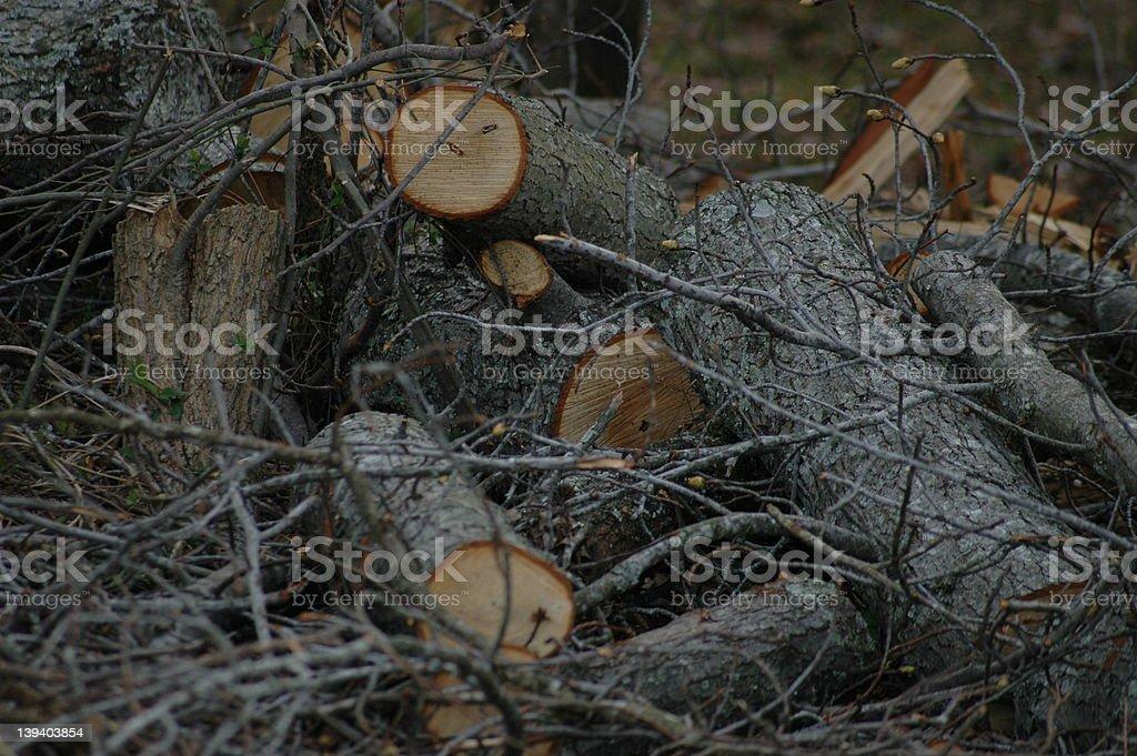 Cut Wood royalty-free stock photo