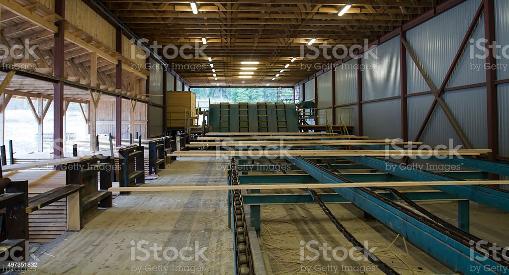 Cut Wood Planks on Conveyor in Sawmill stock photo