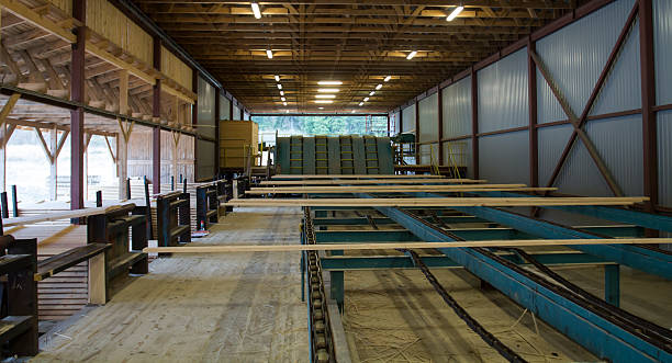 Cut Wood Planks on Conveyor in Sawmill stock photo
