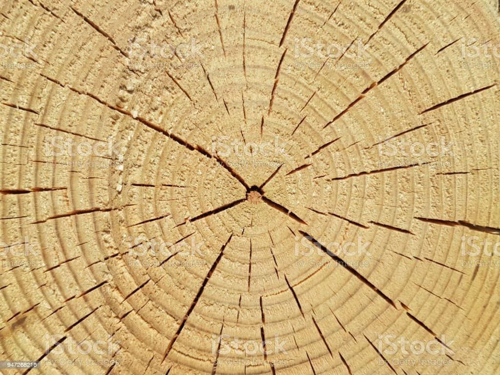 cut wood, wood, old wood, close-up of circles, space for text