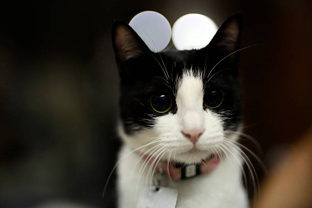 cute adorable black white kitten