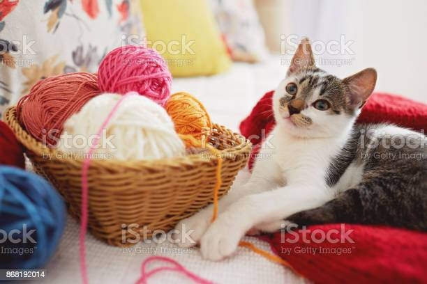Cute adorable kitten playing with yarn picture id868192014?b=1&k=6&m=868192014&s=612x612&h=h34vn8uup58vr4yl7ejq2xxzp uhypnjvux hey21gg=