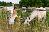 Cute adorable little blond caucasian kid girl meet beautiful white horse near wooden fence at countryside ranch or farm on summer day. Small female child stroking big rural pet foal at grass meadow.