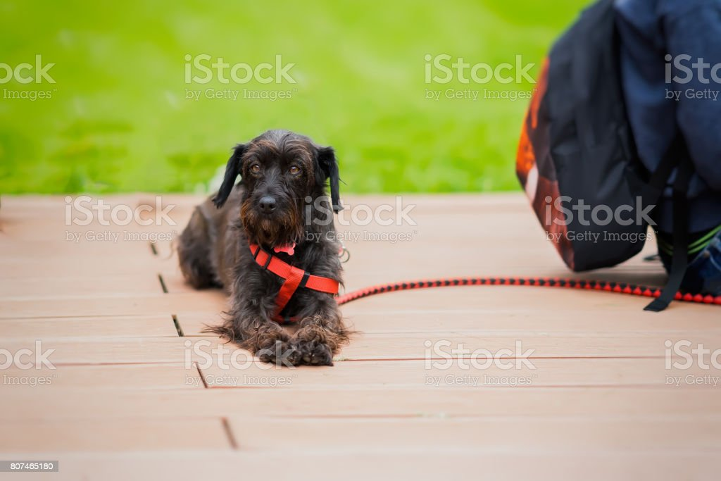 Cute adult abandoned Dog with sad eyes from shelter waiting to be adopted. Look of hope. Concept of Loneliness, uselessness, social problem of homeless animals, adoption stock photo