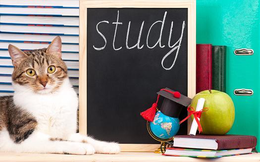 istock Cute adult cat 539235756