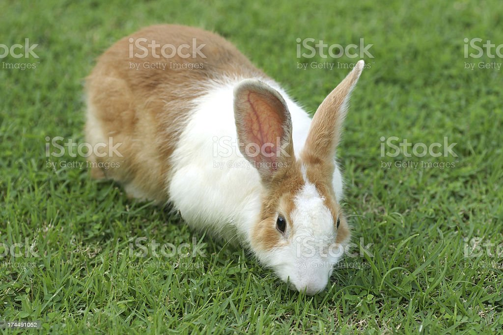 Cute and Beauty Rabbit stock photo