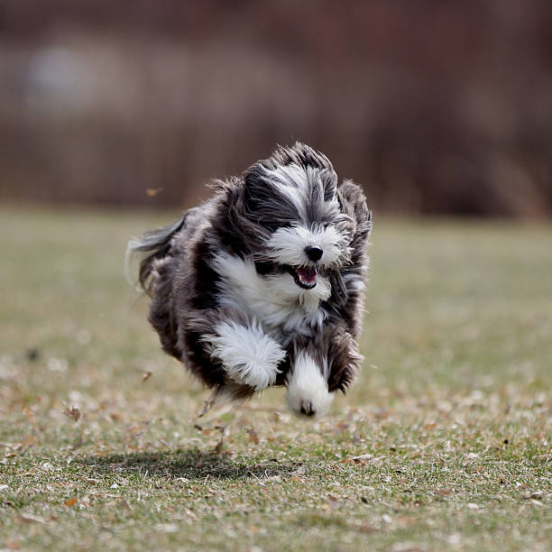 Cute and playful dog running in the grass. stock photo