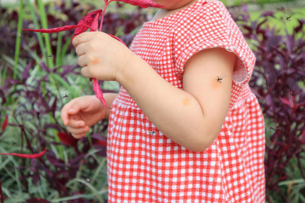 cute asian baby girl has skin rash and allergy from mosquito bite and sucking blood while playing outdoor cute asian baby girl has skin rash and allergy from mosquito bite and sucking blood while playing outdoor stinging stock pictures, royalty-free photos & images