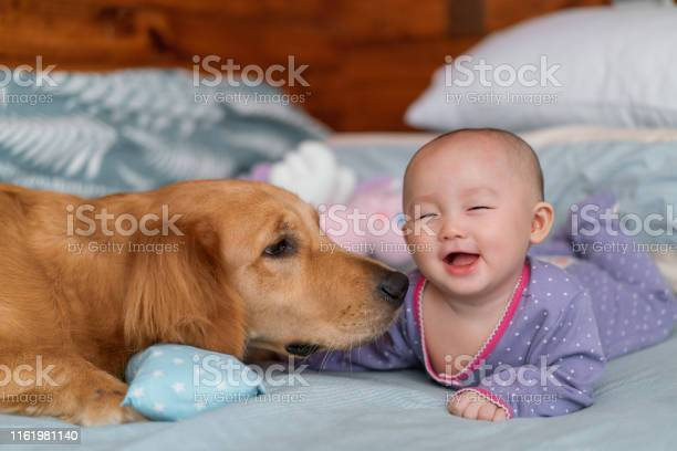 Cute asian baby girl on bed with pet dog golden retriever picture id1161981140?b=1&k=6&m=1161981140&s=612x612&h=voaclcoy67171fwcpvwnryz29y0pbdxsdln3aq ge4w=