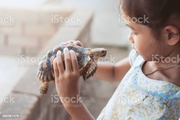 Cute asian child girl holding and playing with turtle with curious picture id930367476?b=1&k=6&m=930367476&s=612x612&h=z3 zsvxikff7bpytm8oy5rsn9fc3 3phjla0v84wwg8=
