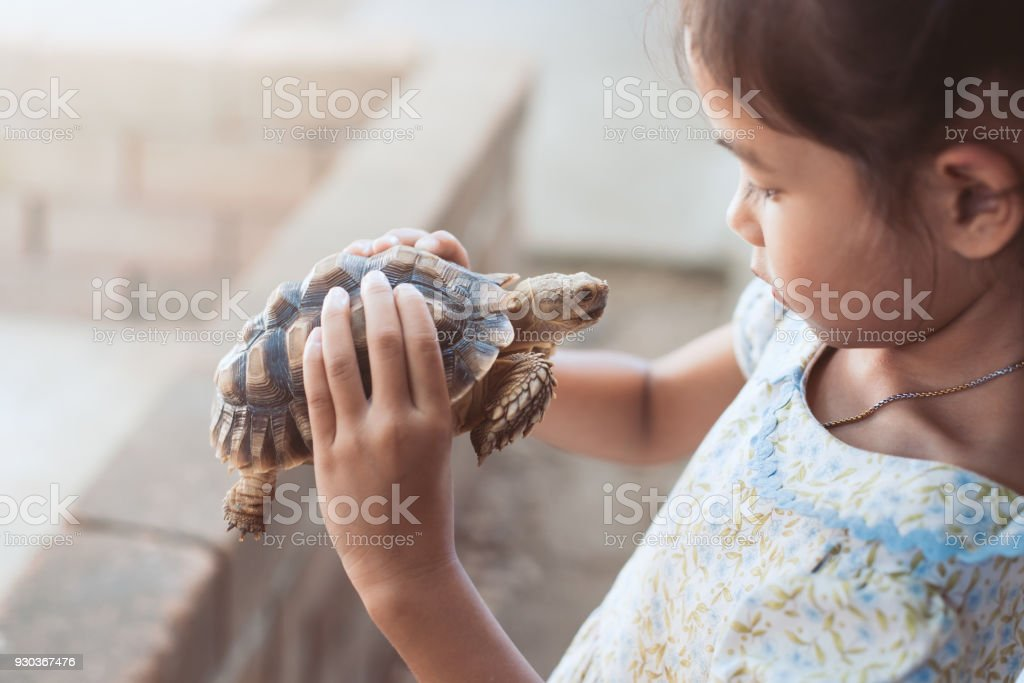 Cute asian child girl holding and playing with turtle with curious and fun stock photo