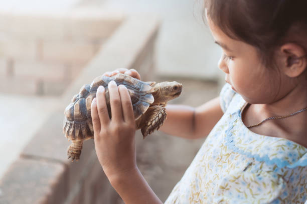cute asian child girl holding and playing with turtle with curious and fun - tartaruga foto e immagini stock