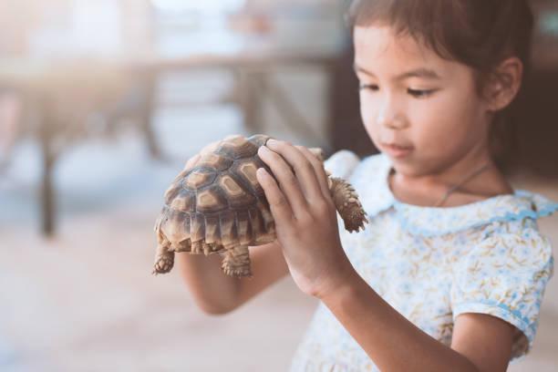 süße asiatische kind mädchen halten und das spiel mit der schildkröte mit neugierig und spaß - babyschildkröten stock-fotos und bilder