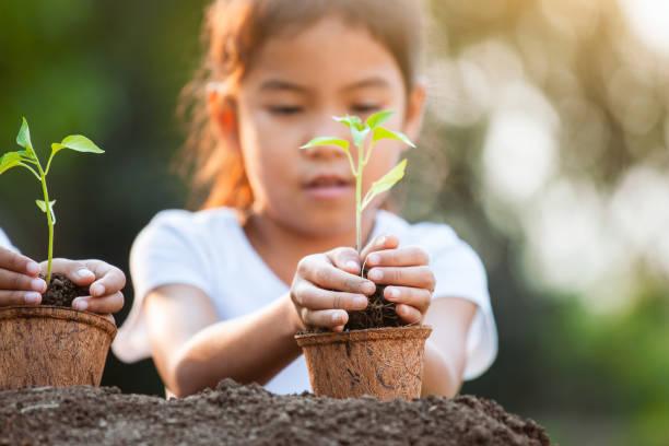 Süße asiatische Kind Mädchen hält jungen Baum für die Pflanzung in recycelten FaserTöpfe im Garten – Foto