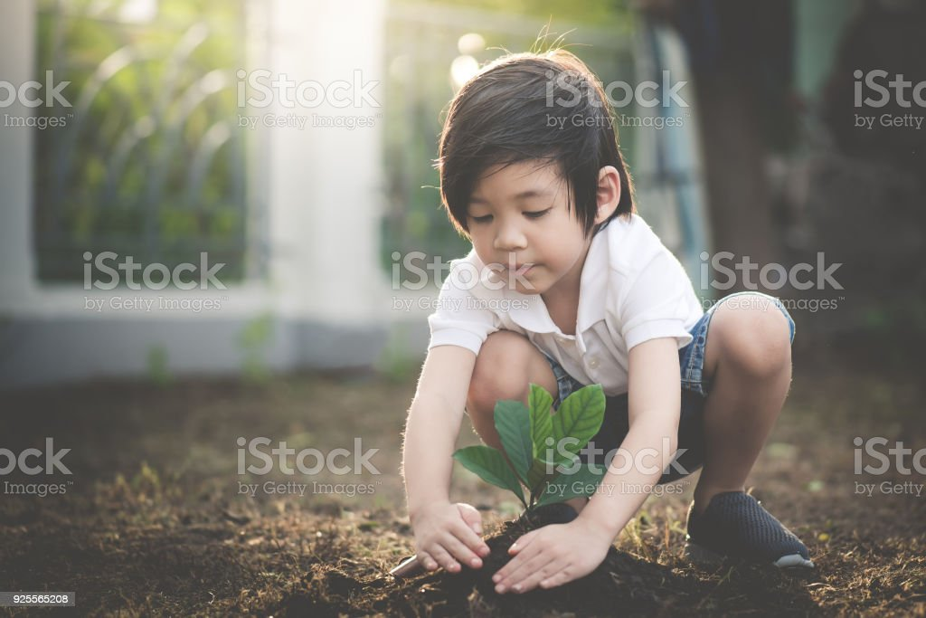Cute Asian child planting young tree on the black soil stock photo