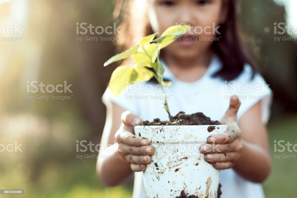 Cute asian little child girl holding young tree in pot for prepare plant on ground stock photo