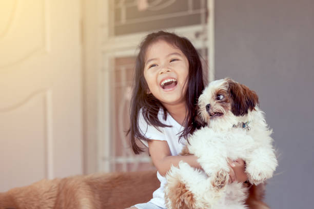 cute asian little girl with her shih tzu dog in vintage color tone - mammifero foto e immagini stock