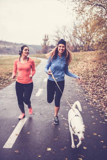niedliche athlet weibchen joggen mit ihrem hund am herbstmorgen - leinenhosen frauen stock-fotos und bilder