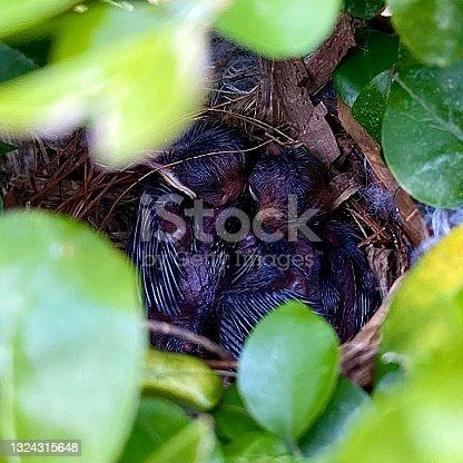 istock Cute baby birds in the cozy nest 1324315648