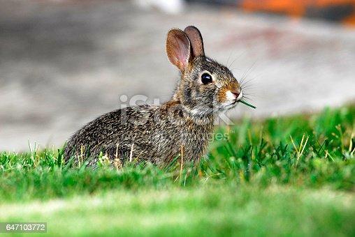 A cute bunny being cute