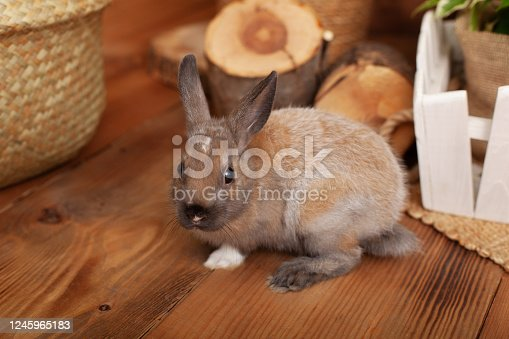 925481382 istock photo Cute baby bunny relax next to straw carpet in warm tones. Home decorative rabbit. portrait funny little bunny on floor at home and looking in profile. Lovely pet for children and family. Pet concept 1245965183